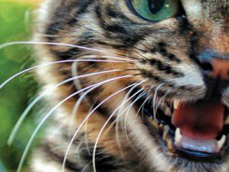 sustainability-cats-wild